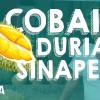 Berburu Durian Sinapeul – Kabar Wisata